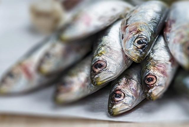riba po vreme na bremennost