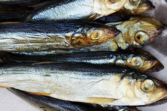 riba po vreme na bremennost 1